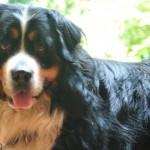 Animali home page