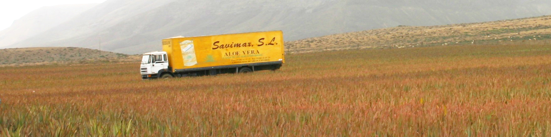 Savimax-1